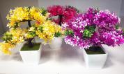 گلدان های مینیاتوری